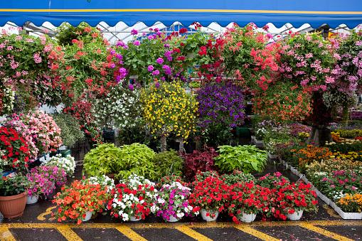 ペチュニア「ガーデンセンターや植物園、花、ガーデニングの春」:スマホ壁紙(9)