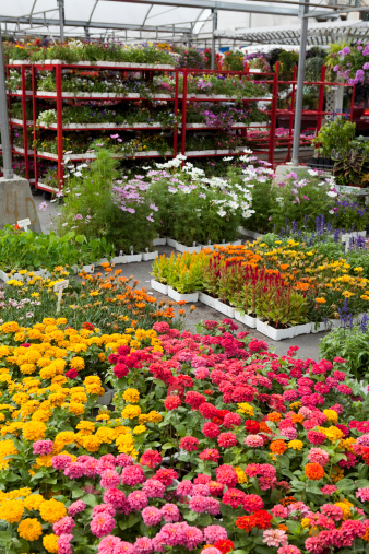 Flower Shop「Garden Center and Plant Nursery with Flowers for Spring Gardening」:スマホ壁紙(1)