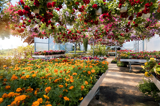 Plant Nursery「Garden center」:スマホ壁紙(13)