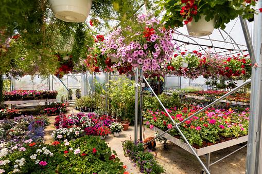 Plant Nursery「Garden center」:スマホ壁紙(4)