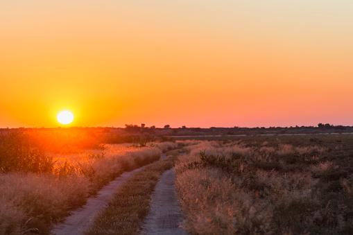Kalahari Desert「Botswana, Kalahari, Central Kalahari Game Reserve, piste at sunrise」:スマホ壁紙(12)