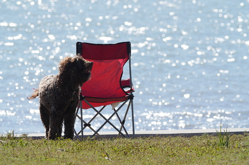 Camping Chair「Dog and camping chair」:スマホ壁紙(9)