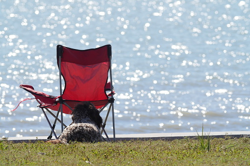 Camping Chair「Dog and camping chair」:スマホ壁紙(8)