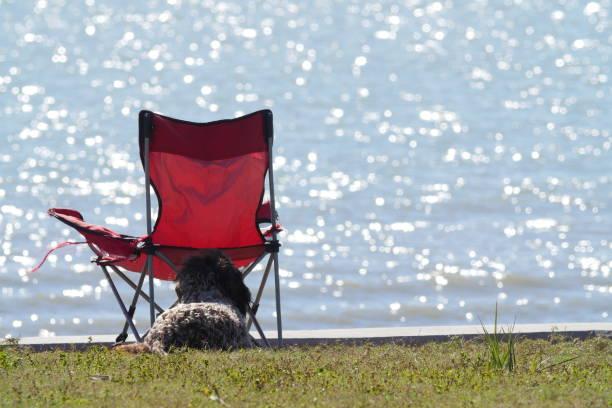 Dog and camping chair:スマホ壁紙(壁紙.com)