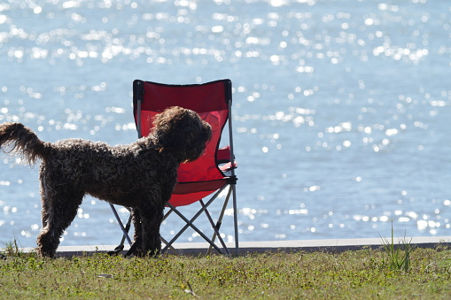 Camping Chair「Dog and camping chair」:スマホ壁紙(10)