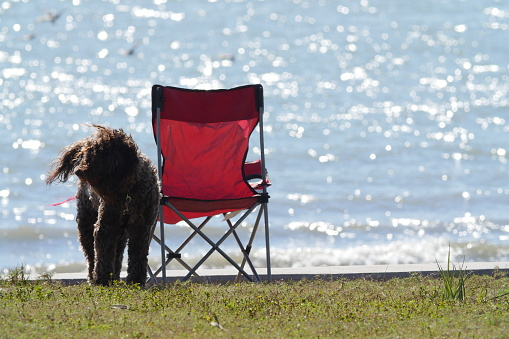 Camping Chair「Dog and camping chair」:スマホ壁紙(4)