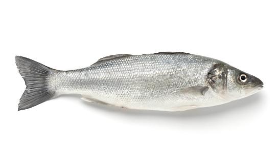 Sea Bass「A single sea bass on a white background」:スマホ壁紙(8)