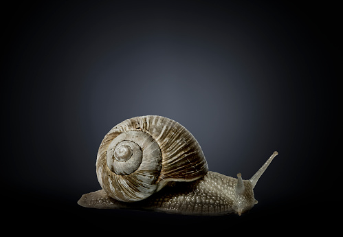 snails「Studio photograph of a snail」:スマホ壁紙(1)