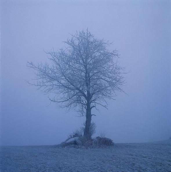 桜「Cherry Tree during the Winter, Lower Austria, Waldviertel, Photograph, Around 2004」:写真・画像(7)[壁紙.com]