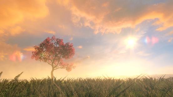 Sunny「Cherry tree on the field」:スマホ壁紙(15)