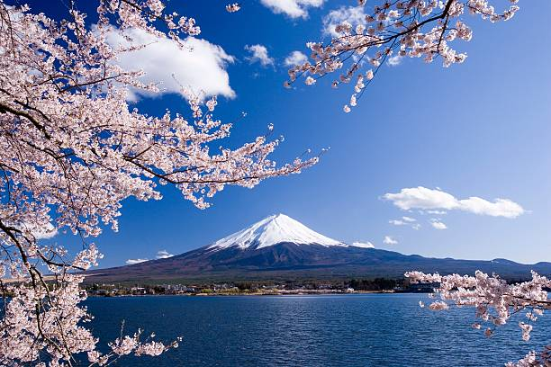 Cherry tree branches and Mt. Fuji, Yamanashi Prefecture, Japan:スマホ壁紙(壁紙.com)
