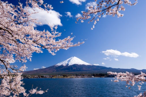 桜「Cherry tree branches and Mt. Fuji, Yamanashi Prefecture, Japan」:スマホ壁紙(19)