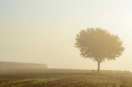 桜「Cherry tree with morning mist in autumn, Moenchberg, Bavaria, Germany」:スマホ壁紙(13)