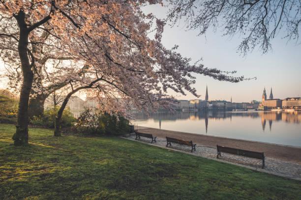 Cherry trees by Binnenalster lake against sky during springtime in Hamburg, Germany:スマホ壁紙(壁紙.com)