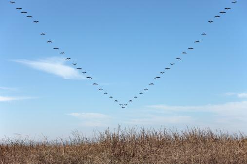 """Flock Of Birds「Geese in """"V"""" Pattern」:スマホ壁紙(14)"""