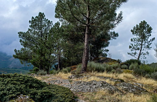 Footpath「Wild trail with pine tree and rocks, Portugal」:スマホ壁紙(7)
