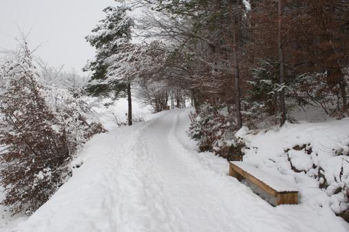 Celje「Snow in the woods」:スマホ壁紙(17)