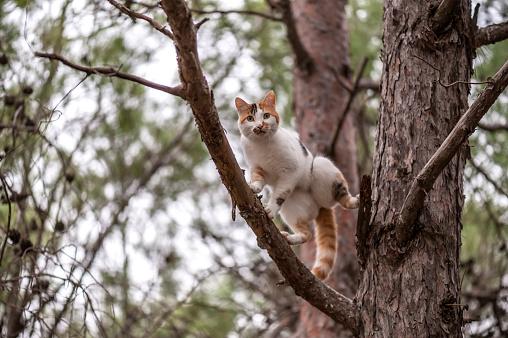 子猫「猫のツリー」:スマホ壁紙(5)