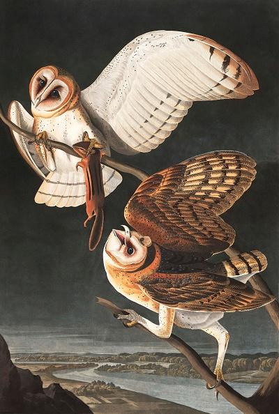 Beak「Barn Owl」:写真・画像(15)[壁紙.com]