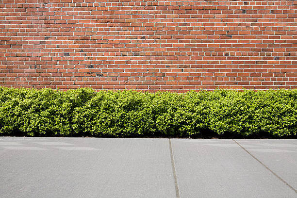 Brick wall with hedge shrubs as background or backdrop:スマホ壁紙(壁紙.com)