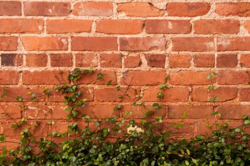 Creeper Plant「Brick Wall and Vines」:スマホ壁紙(3)