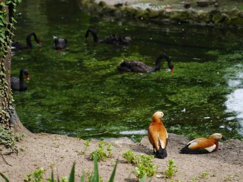鳥「Birds at the pond」:スマホ壁紙(1)