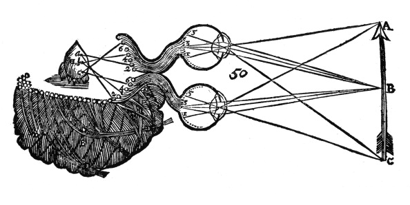 Animal Eye「Rene Descartes' idea of vision, showing the function of the eye, optic nerve and brain, 1692.」:写真・画像(6)[壁紙.com]
