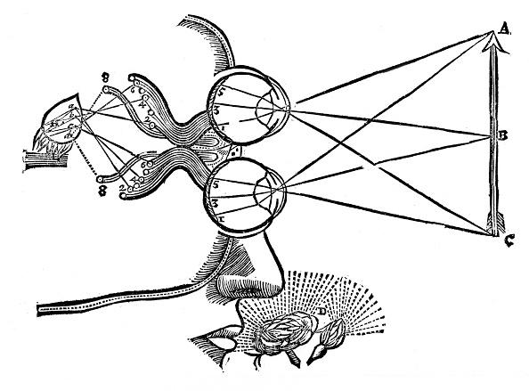 Animal Eye「Rene Descartes' illustration of the co-ordination of the senses, 1692.」:写真・画像(12)[壁紙.com]