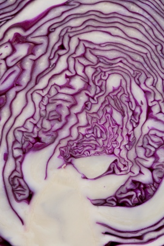 Red Cabbage「cross section of a red cabbage」:スマホ壁紙(5)