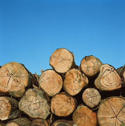Log「Cross section of cut trees against blue sky」:スマホ壁紙(12)