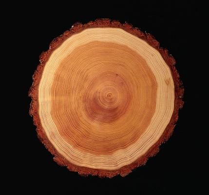 Tree Ring「Cross Section of Tree Trunk」:スマホ壁紙(13)