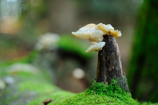 Bayerischer Wald National Park「Oudemansiella mucida」:スマホ壁紙(15)