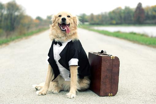 Pets「Traveling Tuxedo Dog」:スマホ壁紙(8)