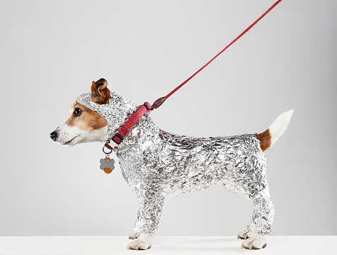 Conceptual Realism「Dog Wrapped In Foil」:スマホ壁紙(16)