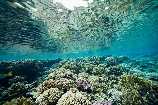 French Overseas Territory「Coral near Fakarava Island」:スマホ壁紙(19)