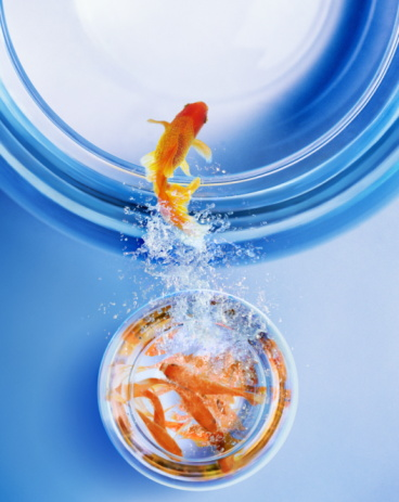 Beginnings「Goldfish leaping from overcrowded bowl into bigger bowl (Composite)」:スマホ壁紙(2)