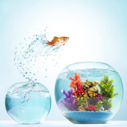 Goldfish「Goldfish Leaping」:スマホ壁紙(17)