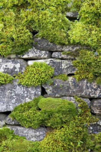 Tim Graham「Moss Covered Dry Stone Wall, UK」:スマホ壁紙(14)