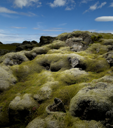 Lava「Moss covered volcanic lava field」:スマホ壁紙(6)