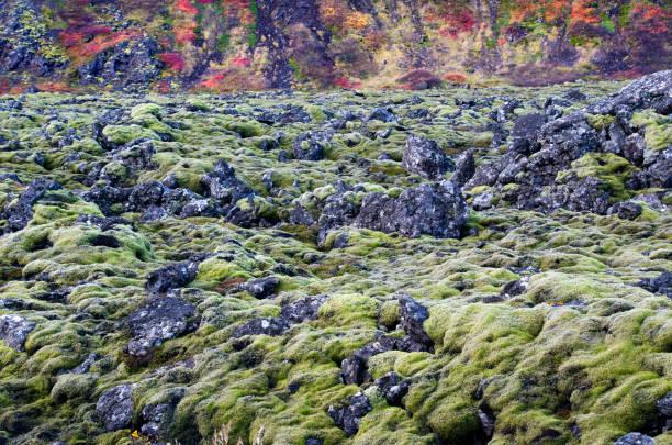 Moss covered Lava:スマホ壁紙(壁紙.com)