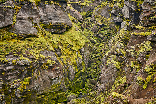 Lava「Moss covered riverbed in a canyon, Central Highlands, Iceland」:スマホ壁紙(2)