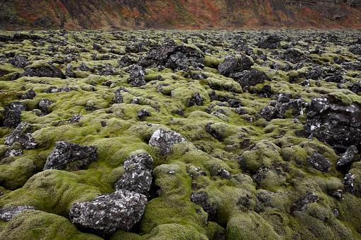 Lava「Moss covered lava field」:スマホ壁紙(10)