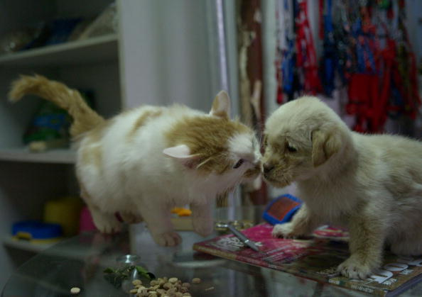 猫「Pet Shop Helps Stray Dogs In Xuzhou」:写真・画像(6)[壁紙.com]