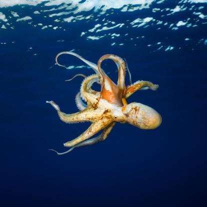 Intelligence「Octopus」:スマホ壁紙(14)