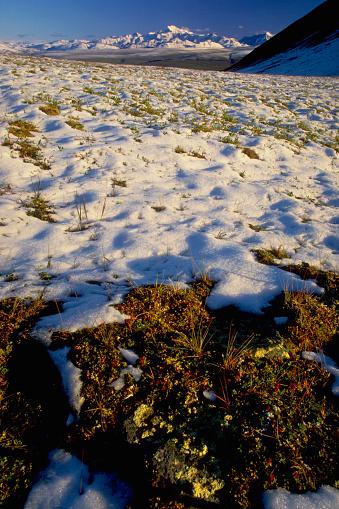Arctic National Wildlife Refuge「Snow on Tundra」:スマホ壁紙(11)