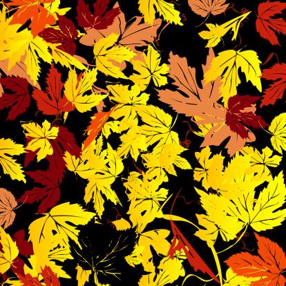 セイヨウカジカエデ「Background for Autumn」:スマホ壁紙(2)