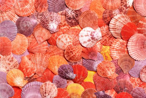 Scallop「Background of seashells」:スマホ壁紙(8)
