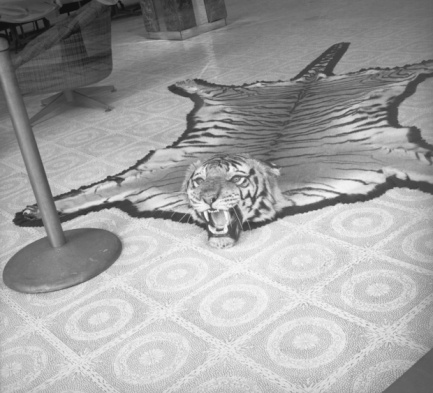 自生「Tiger skin rug lying on floor, (B&W)」:スマホ壁紙(16)