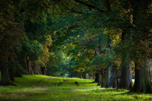 Avenue「English landscape: avenue of oaks at dusk」:スマホ壁紙(18)