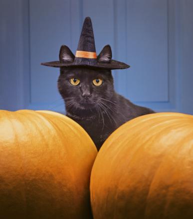 black cat「Black cat wearing witch's hat amongst pumpkins」:スマホ壁紙(13)